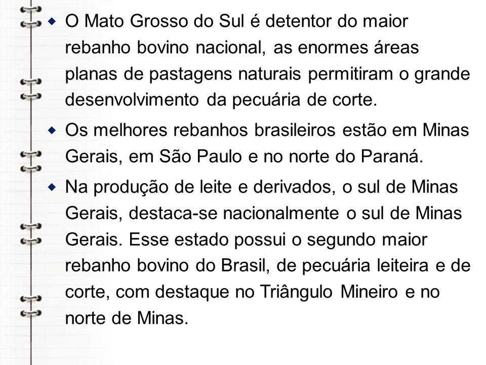 O Mato Grosso do Sul é detentor do maior rebanho bovino nacional, as enormes áreas planas de pastagens naturais permitiram o grande desenvolvimento da pecuária de corte.