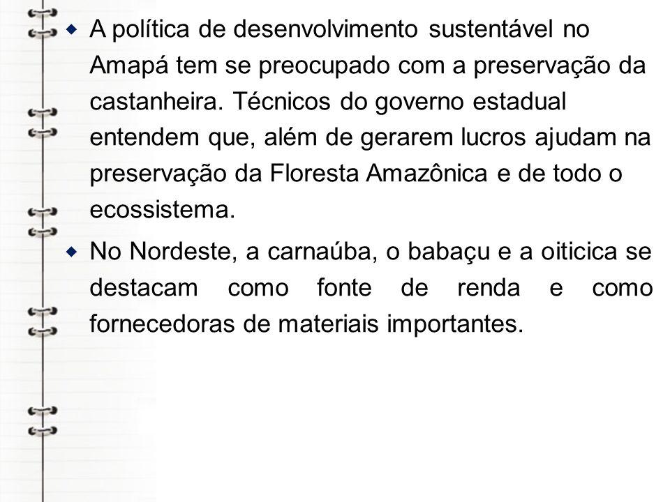 A política de desenvolvimento sustentável no Amapá tem se preocupado com a preservação da castanheira. Técnicos do governo estadual entendem que, além de gerarem lucros ajudam na preservação da Floresta Amazônica e de todo o ecossistema.