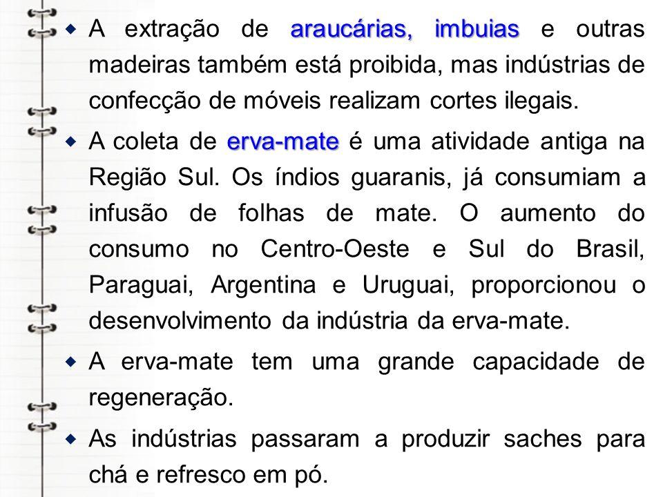 A extração de araucárias, imbuias e outras madeiras também está proibida, mas indústrias de confecção de móveis realizam cortes ilegais.