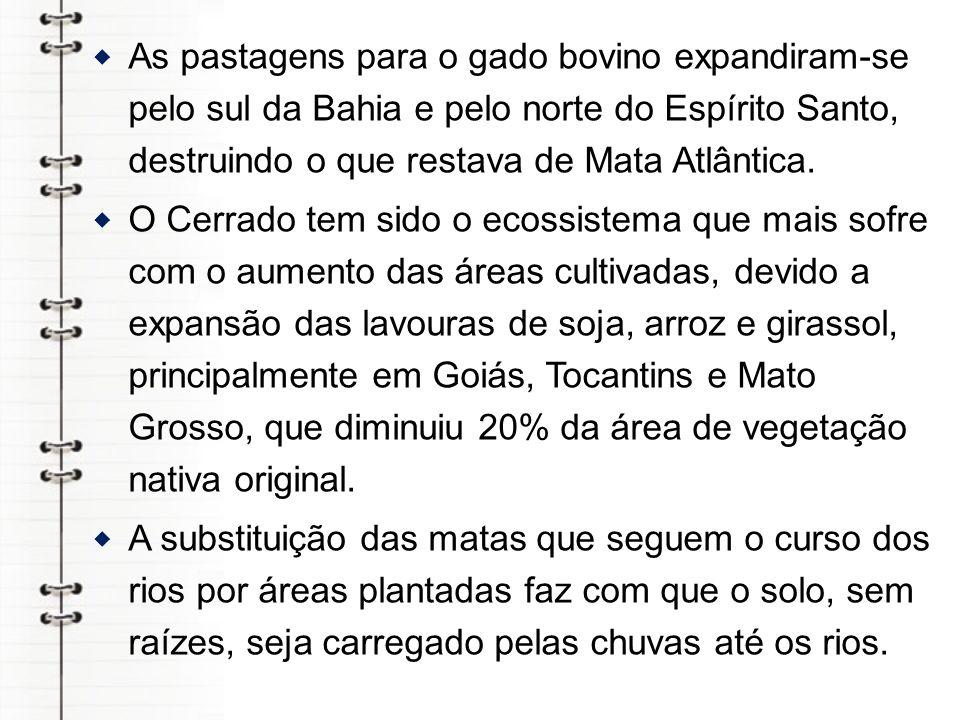 As pastagens para o gado bovino expandiram-se pelo sul da Bahia e pelo norte do Espírito Santo, destruindo o que restava de Mata Atlântica.