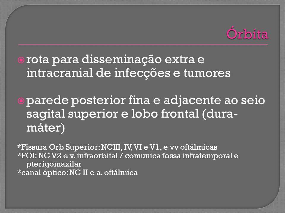 Órbita rota para disseminação extra e intracranial de infecções e tumores.