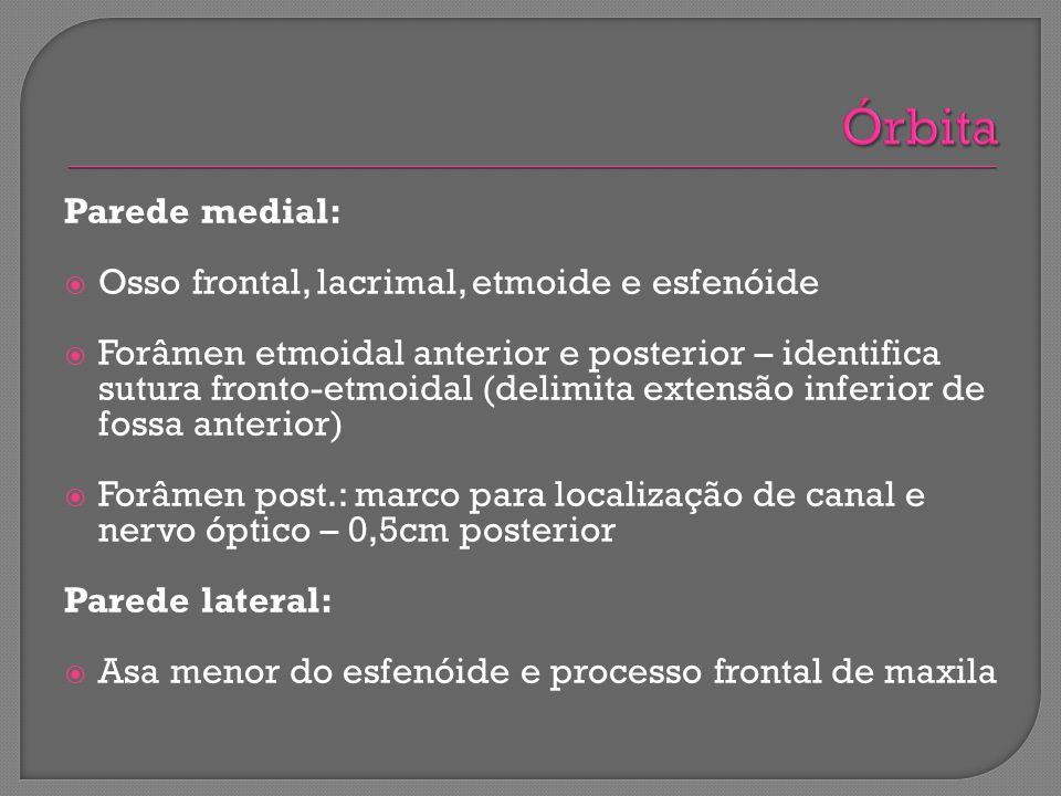 Órbita Parede medial: Osso frontal, lacrimal, etmoide e esfenóide