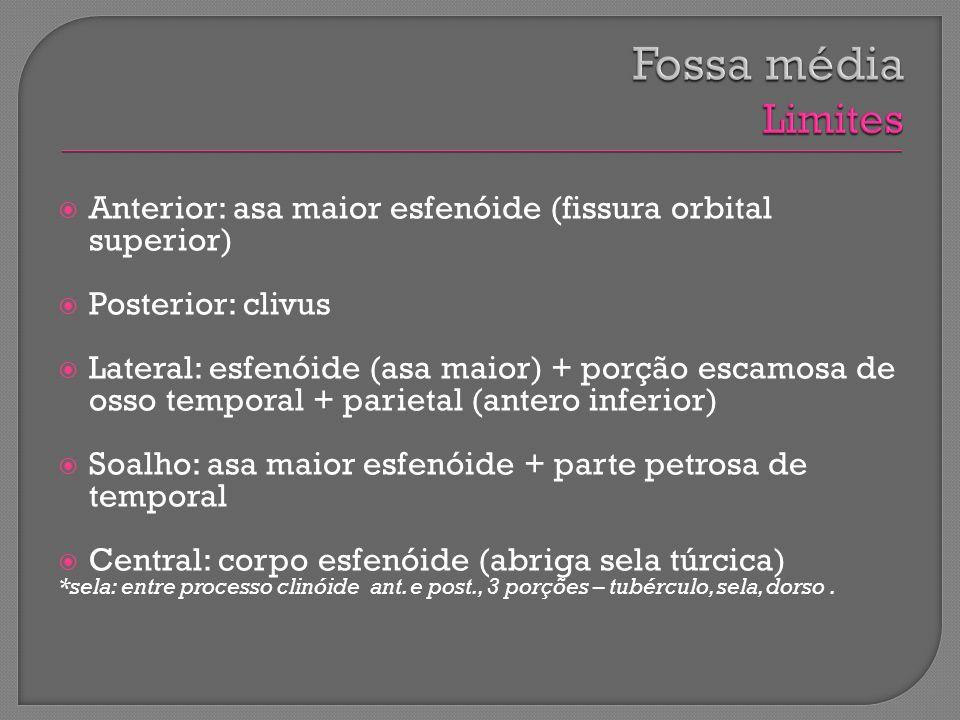 Fossa média Limites Anterior: asa maior esfenóide (fissura orbital superior) Posterior: clivus.