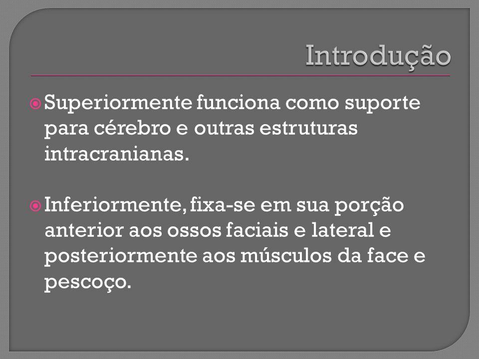 Introdução Superiormente funciona como suporte para cérebro e outras estruturas intracranianas.