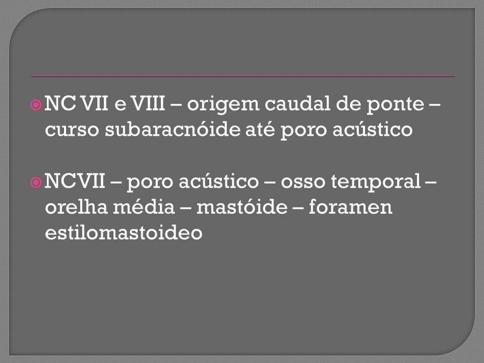 NC VII e VIII – origem caudal de ponte – curso subaracnóide até poro acústico