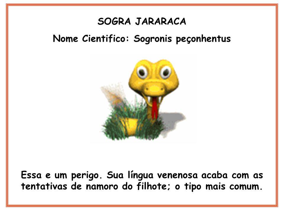 Nome Cientifico: Sogronis peçonhentus
