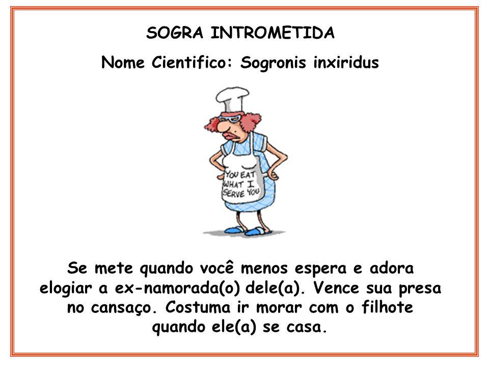 Nome Cientifico: Sogronis inxiridus
