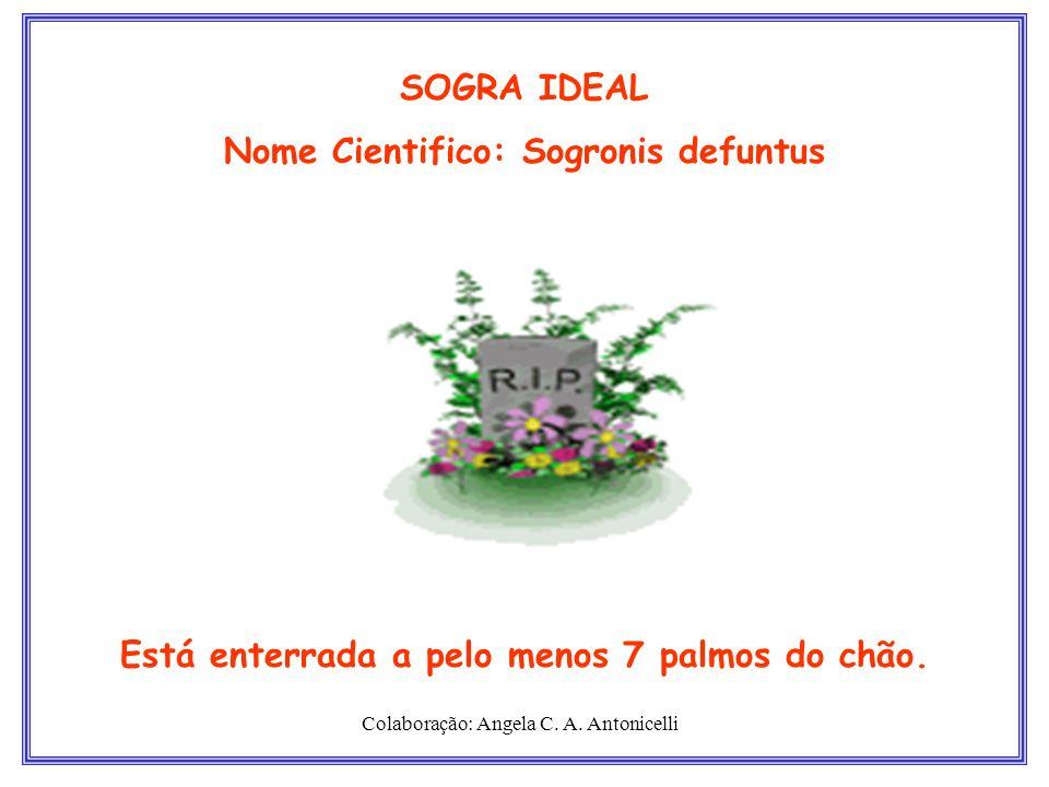 Nome Cientifico: Sogronis defuntus