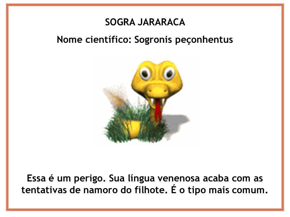 Nome científico: Sogronis peçonhentus