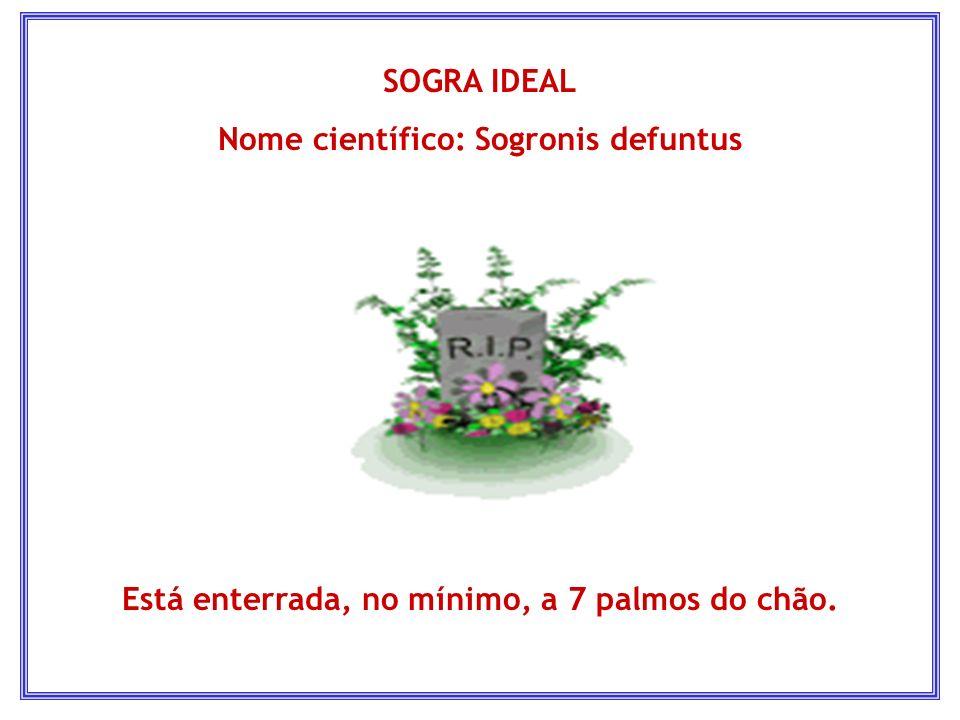 Nome científico: Sogronis defuntus
