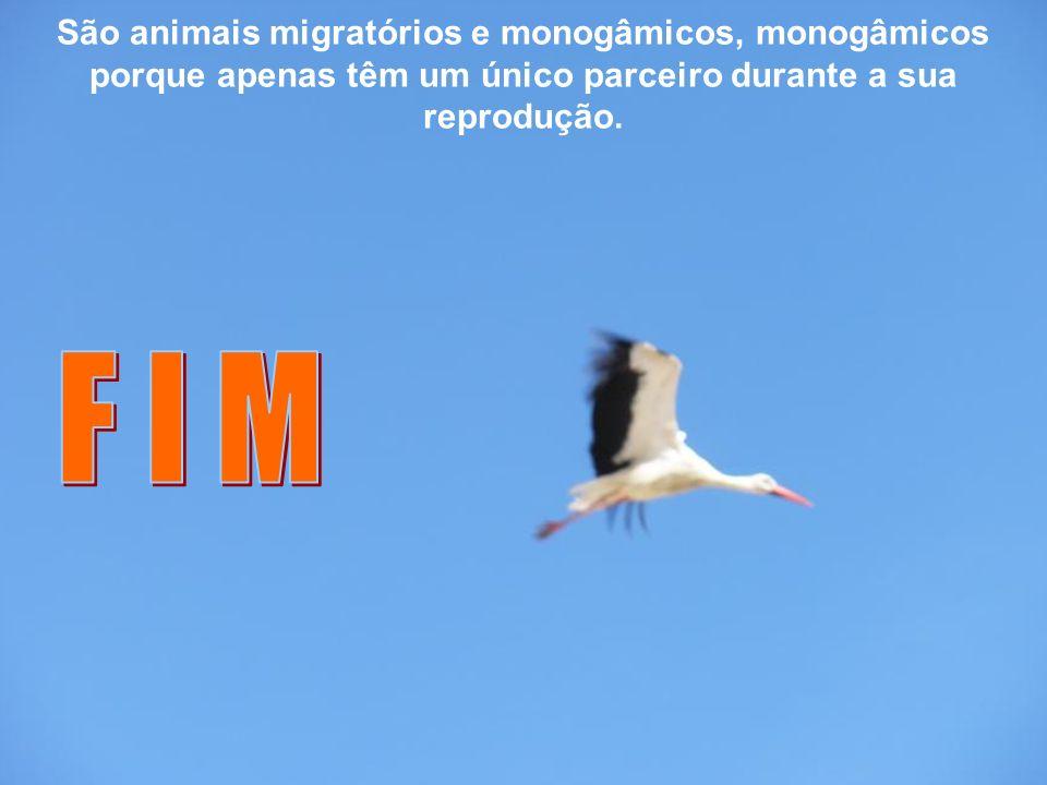 São animais migratórios e monogâmicos, monogâmicos porque apenas têm um único parceiro durante a sua reprodução.