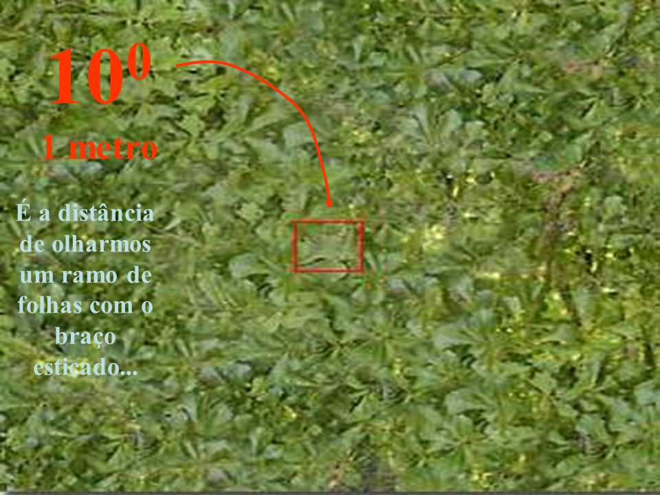 É a distância de olharmos um ramo de folhas com o braço esticado...