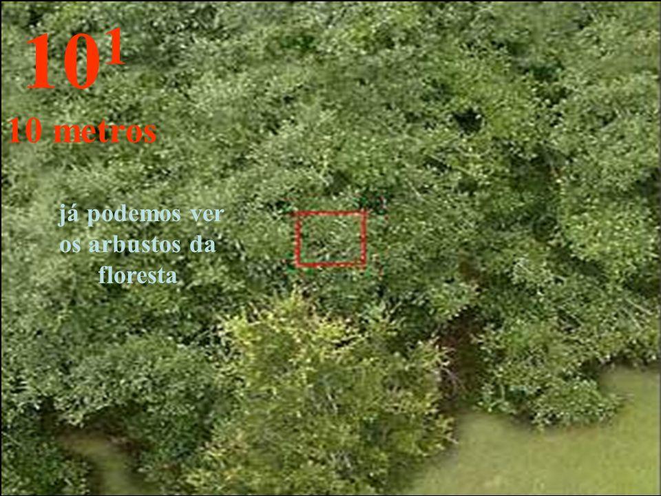 já podemos ver os arbustos da floresta