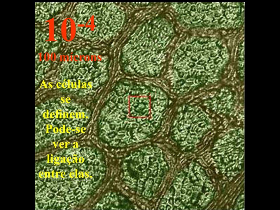 As células se definem. Pode-se ver a ligação entre elas.
