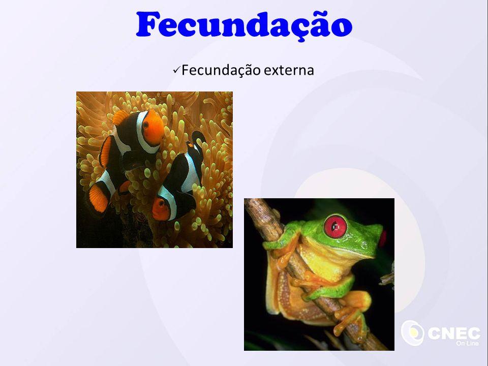 Fecundação Fecundação externa