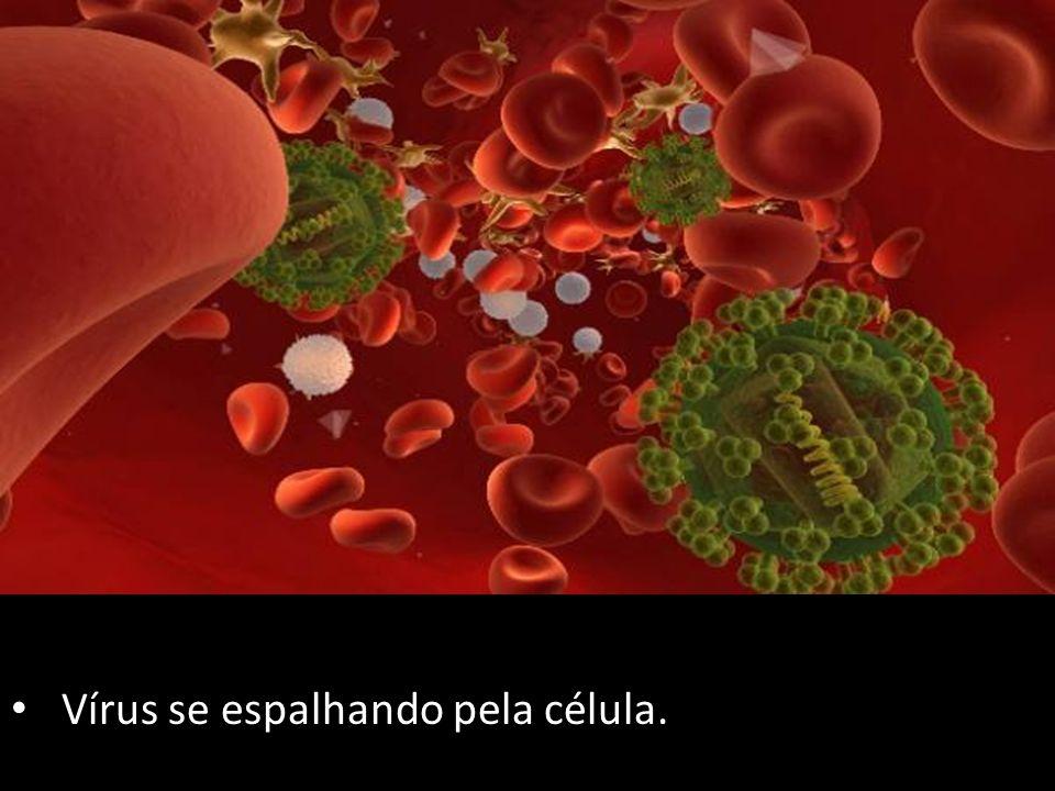 Vírus se espalhando pela célula.