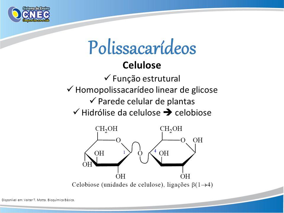 Polissacarídeos Celulose Função estrutural