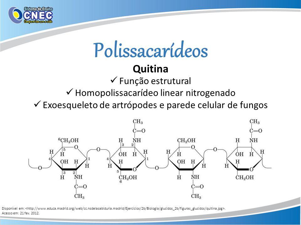 Polissacarídeos Quitina Função estrutural