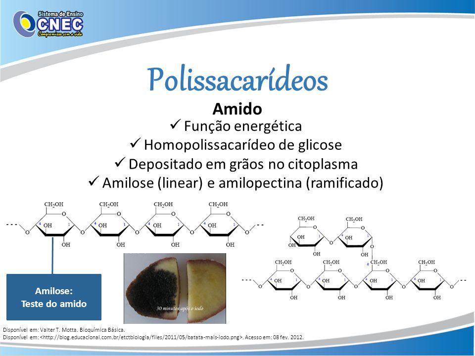 Polissacarídeos Amido Função energética Homopolissacarídeo de glicose