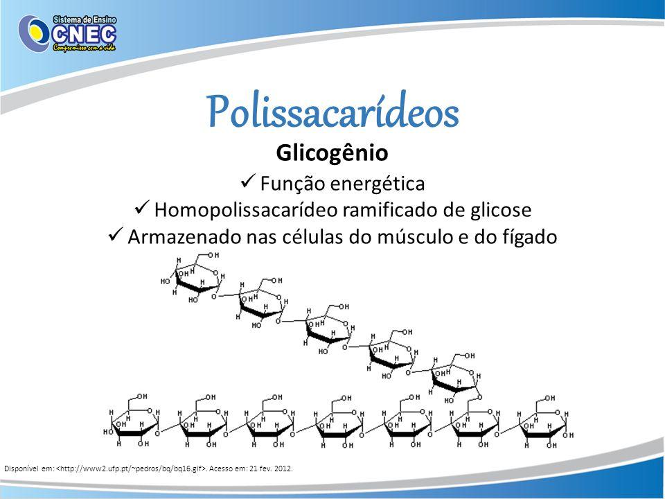 Polissacarídeos Glicogênio Função energética
