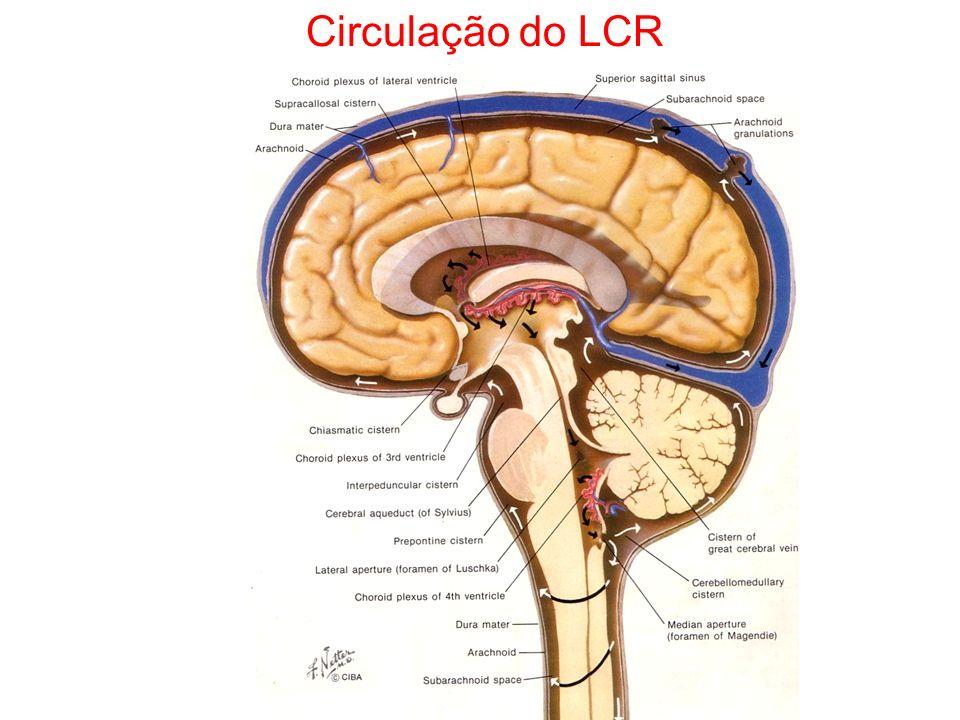 Circulação do LCR