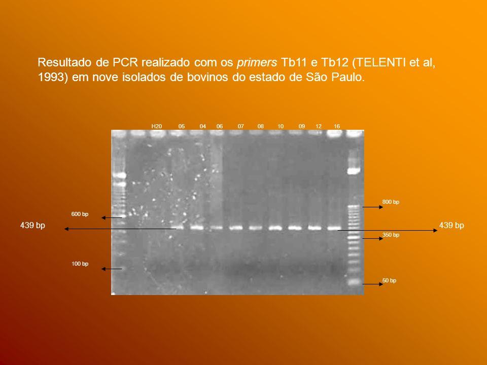 Resultado de PCR realizado com os primers Tb11 e Tb12 (TELENTI et al, 1993) em nove isolados de bovinos do estado de São Paulo.