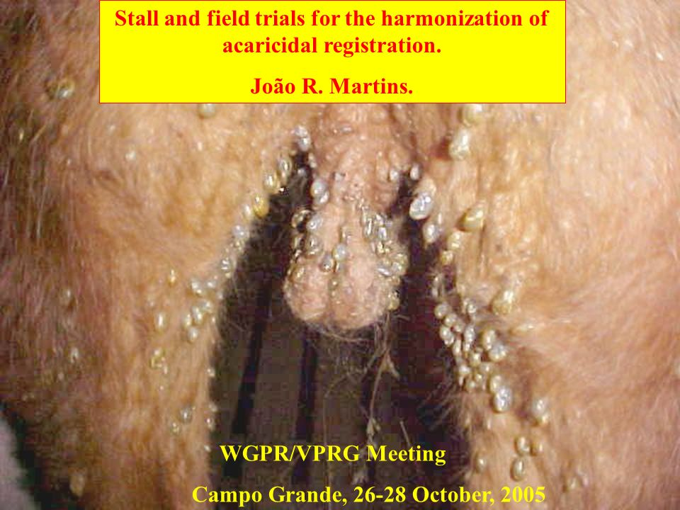 Stall and field trials for the harmonization of acaricidal registration.
