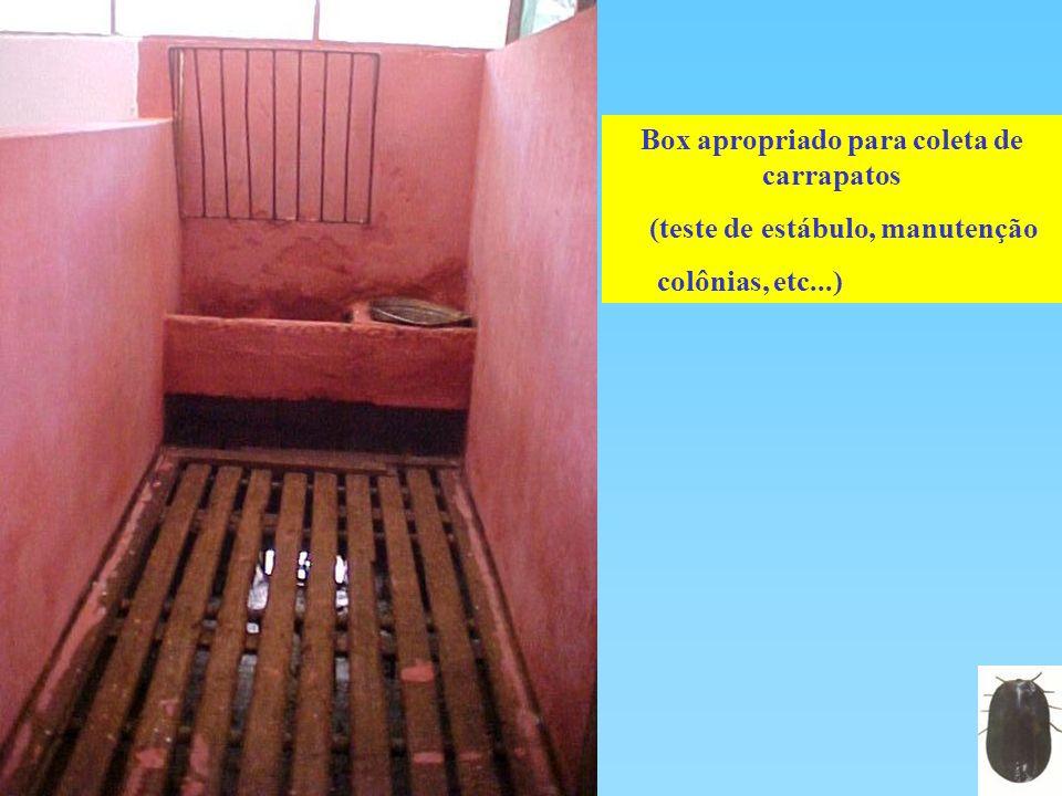 Box apropriado para coleta de carrapatos