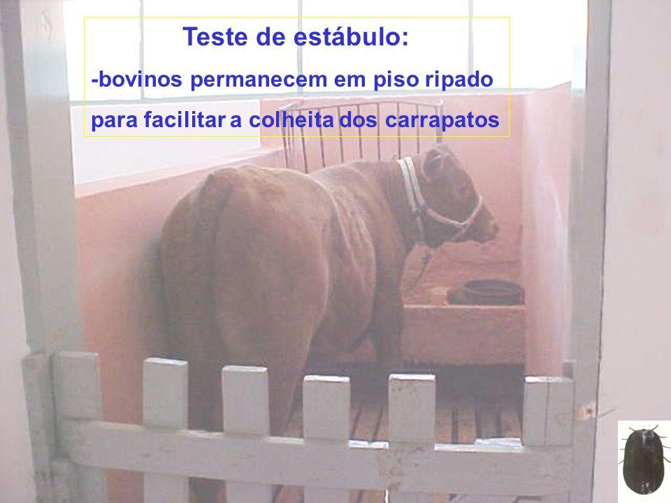 Teste de estábulo: -bovinos permanecem em piso ripado