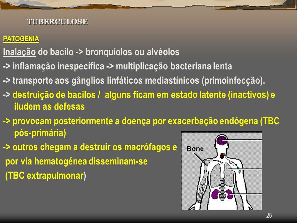 Inalação do bacilo -> bronquíolos ou alvéolos