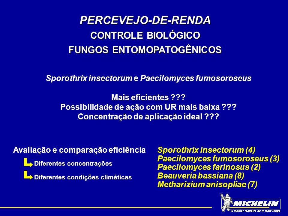 PERCEVEJO-DE-RENDA CONTROLE BIOLÓGICO FUNGOS ENTOMOPATOGÊNICOS