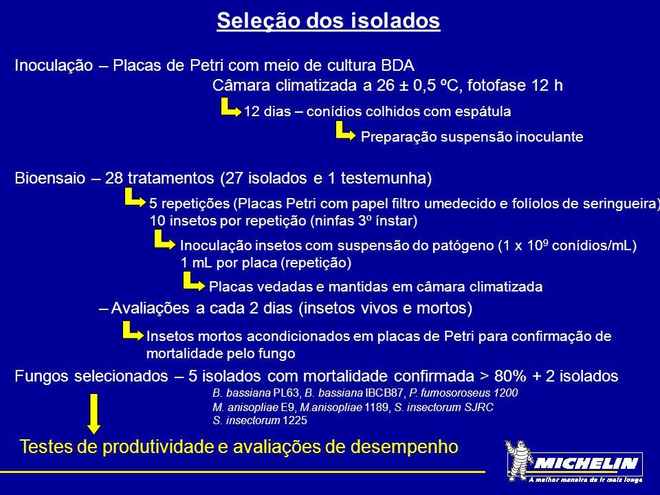 Seleção dos isolados Inoculação – Placas de Petri com meio de cultura BDA. Câmara climatizada a 26 ± 0,5 ºC, fotofase 12 h.