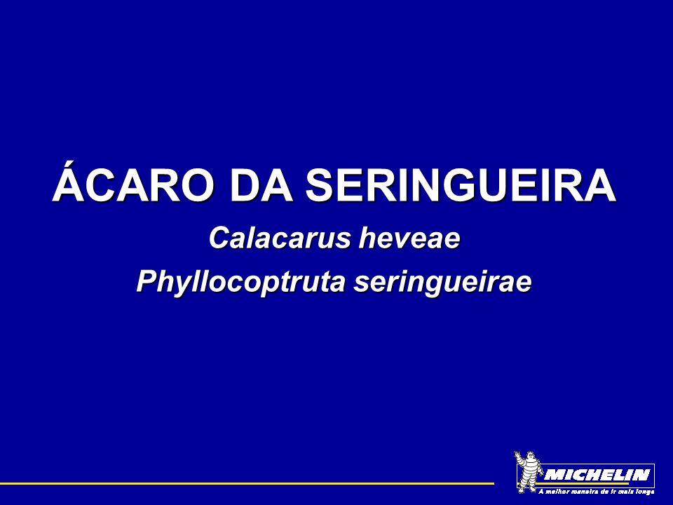 Phyllocoptruta seringueirae