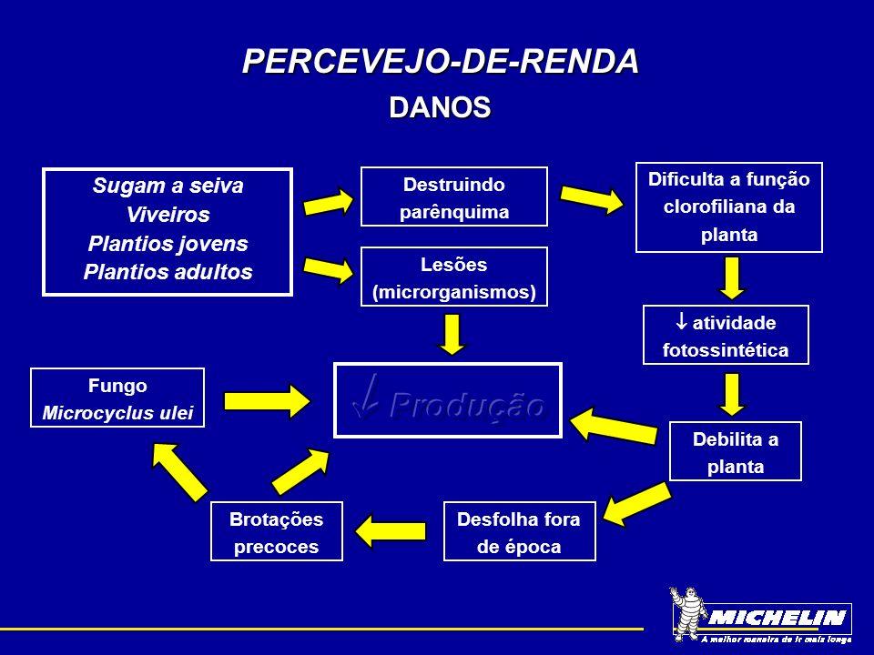  Produção PERCEVEJO-DE-RENDA DANOS Sugam a seiva Viveiros