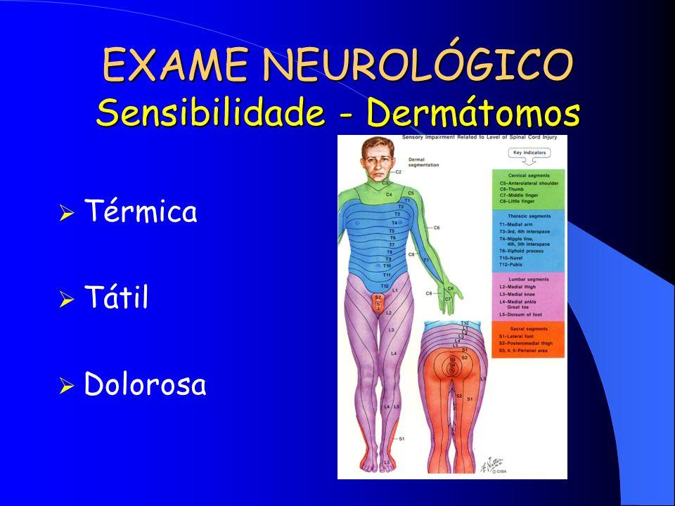 EXAME NEUROLÓGICO Sensibilidade - Dermátomos