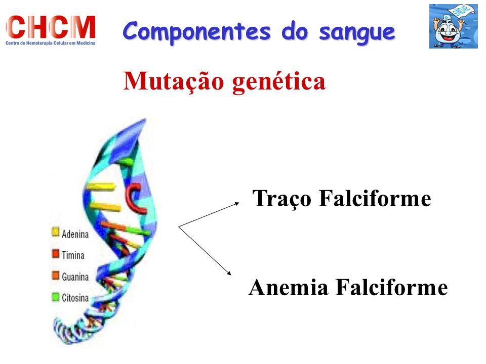 Mutação genética Componentes do sangue Traço Falciforme