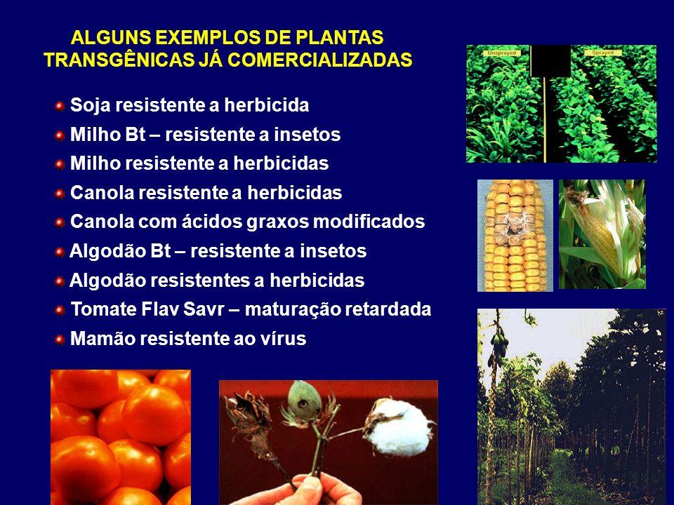 ALGUNS EXEMPLOS DE PLANTAS TRANSGÊNICAS JÁ COMERCIALIZADAS