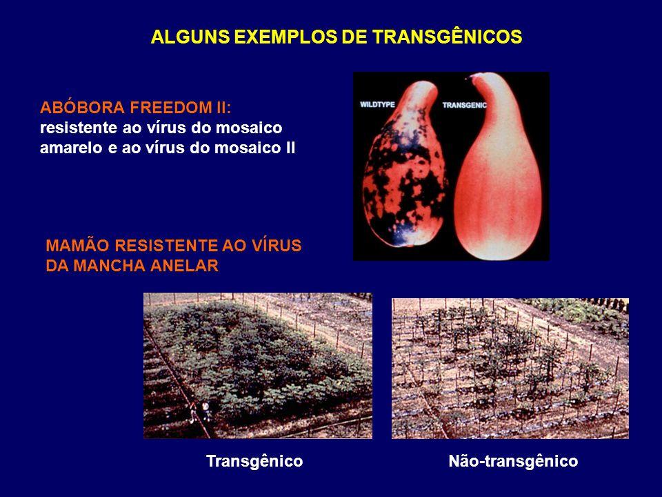 ALGUNS EXEMPLOS DE TRANSGÊNICOS