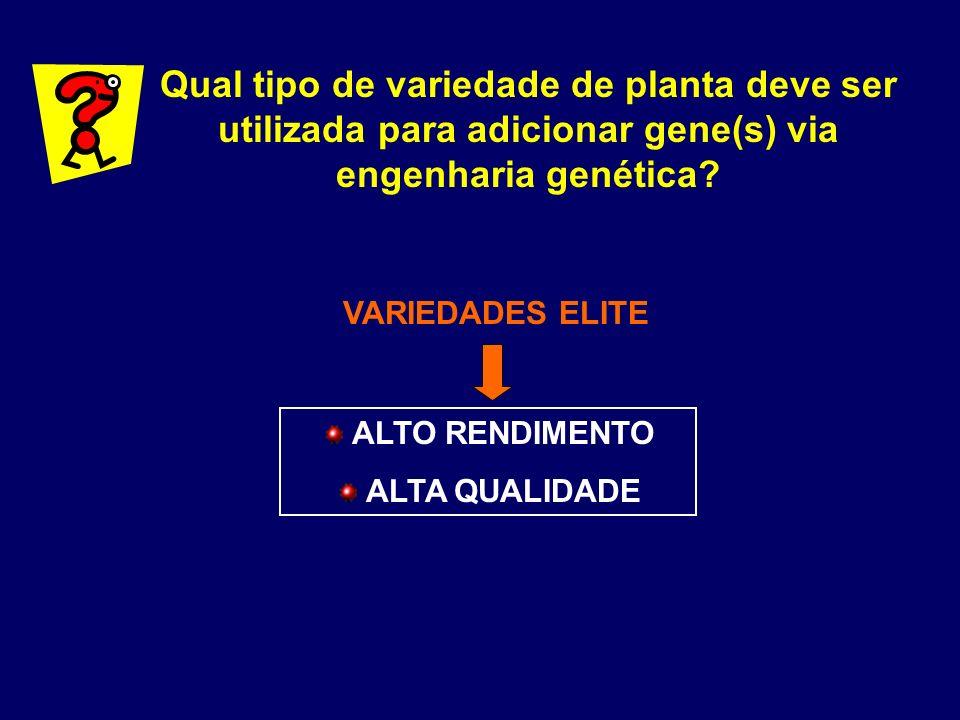 Qual tipo de variedade de planta deve ser utilizada para adicionar gene(s) via engenharia genética
