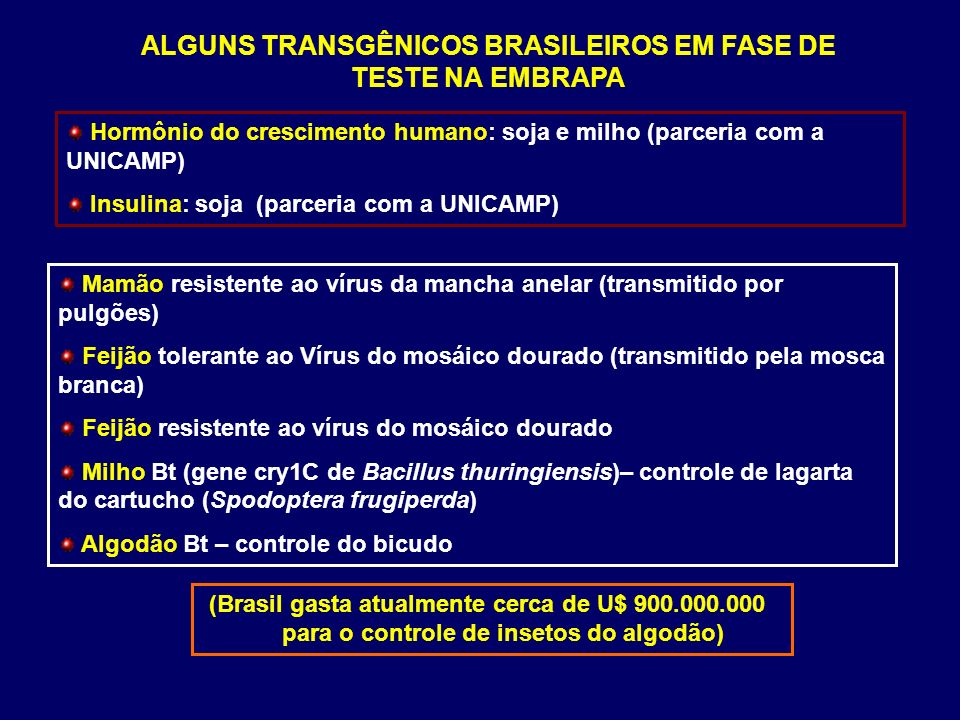 ALGUNS TRANSGÊNICOS BRASILEIROS EM FASE DE TESTE NA EMBRAPA