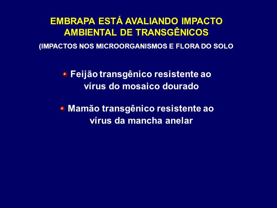 EMBRAPA ESTÁ AVALIANDO IMPACTO AMBIENTAL DE TRANSGÊNICOS