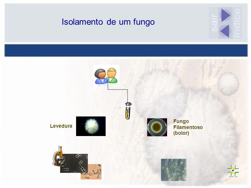 Isolamento de um fungo sair índice Fungo Filamentoso (bolor) Levedura