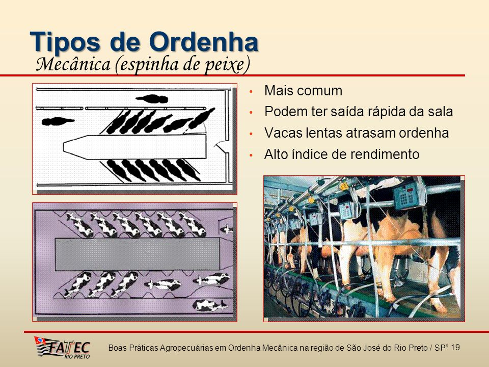 Tipos de Ordenha Mecânica (espinha de peixe) Mais comum