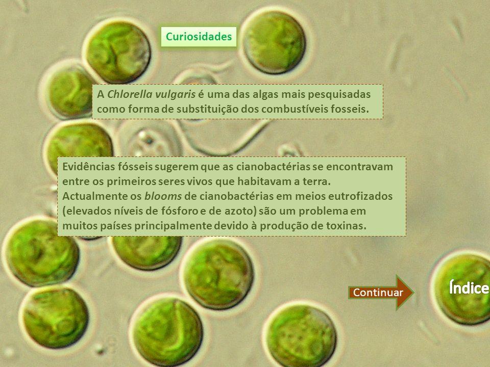 Curiosidades A Chlorella vulgaris é uma das algas mais pesquisadas como forma de substituição dos combustíveis fosseis.