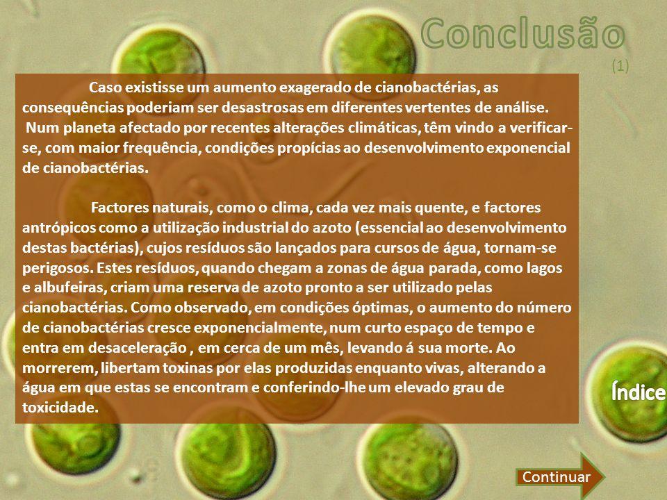 Conclusão (1) Caso existisse um aumento exagerado de cianobactérias, as consequências poderiam ser desastrosas em diferentes vertentes de análise.