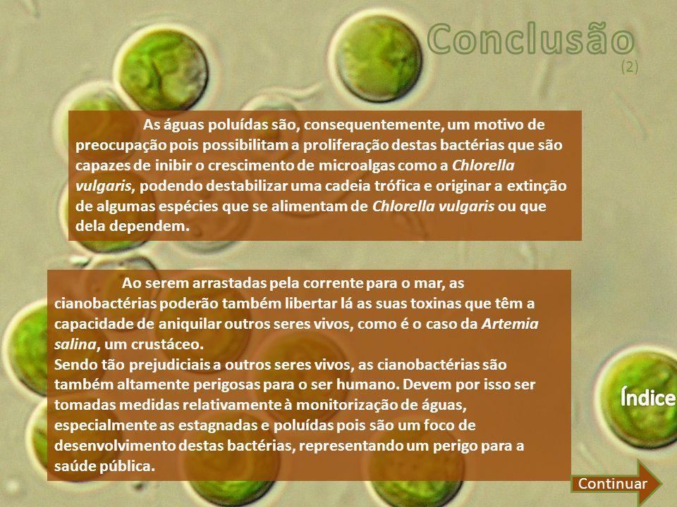 Conclusão (2)
