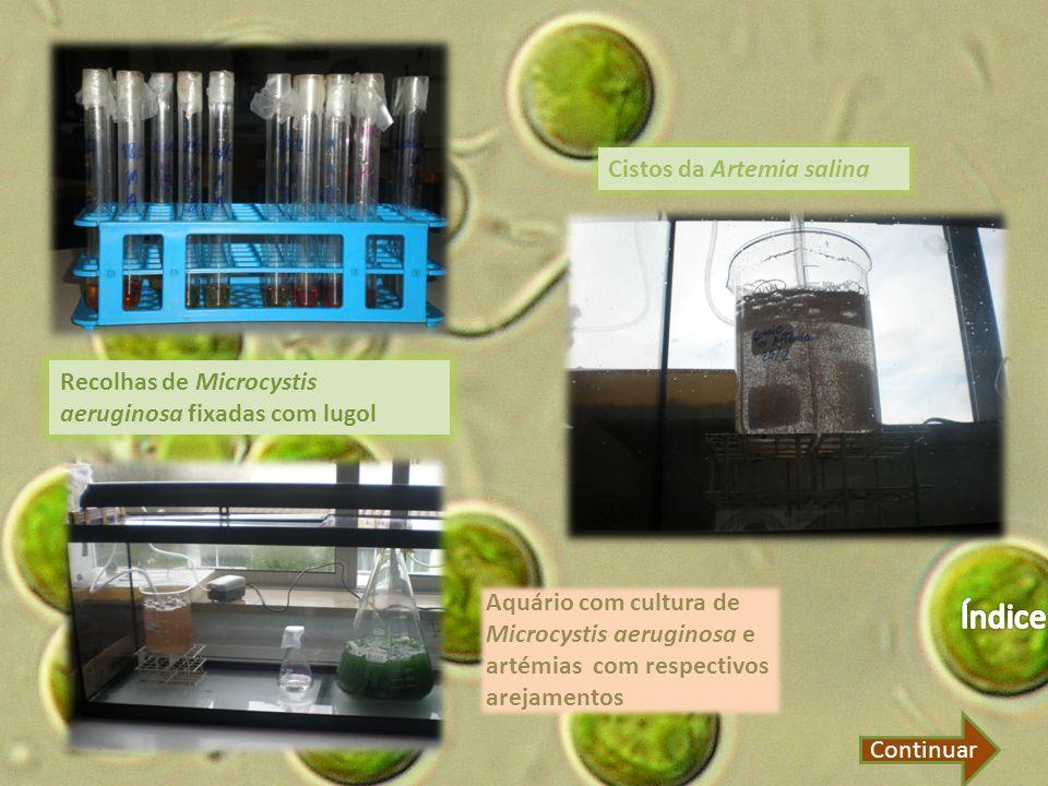 Índice Cistos da Artemia salina