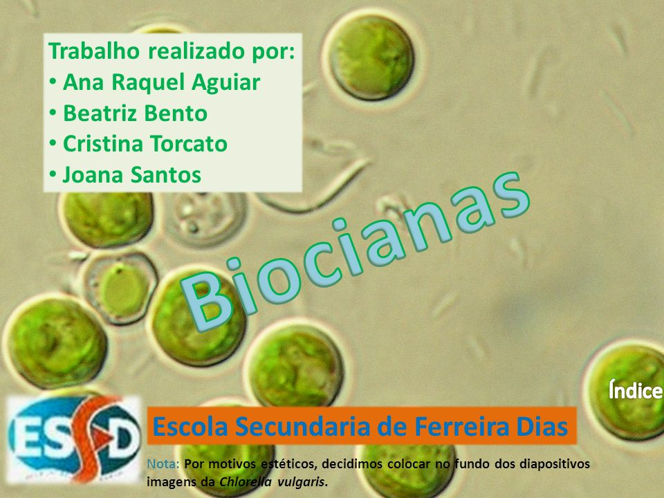 Biocianas Escola Secundaria de Ferreira Dias Trabalho realizado por: