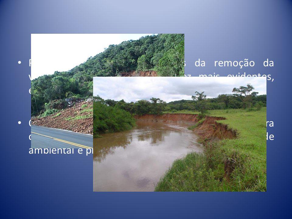 Processos erosivos, decorrentes da remoção da vegetação natural, são cada vez mais evidentes, especialmente nas margens dos rios.