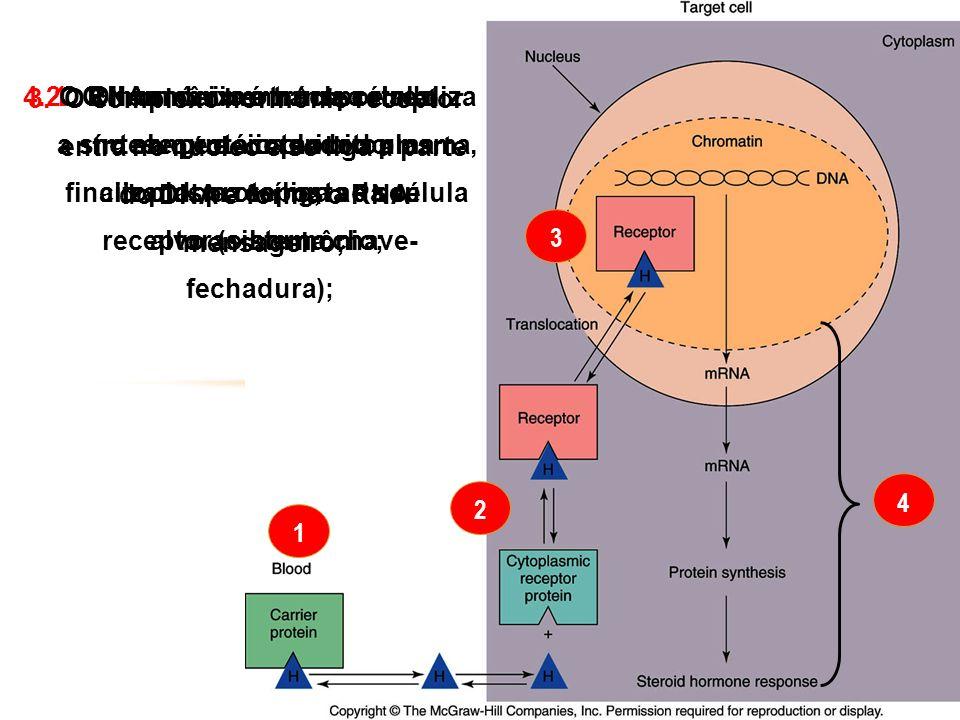 O hormônio é transportado no sangue acoplado a uma proteína;